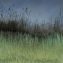 Field Of Reeds
